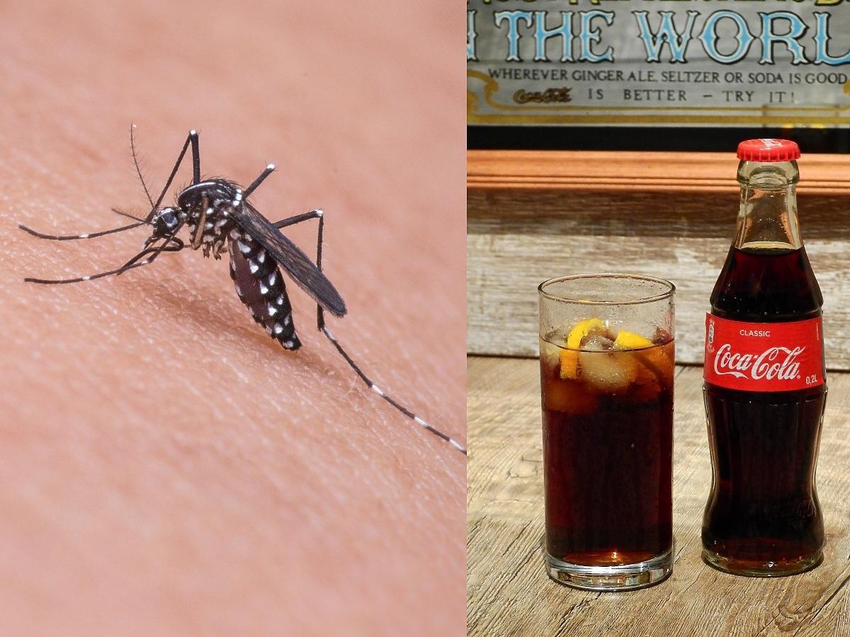 Banalny trik na komary z Coca-Colą. Działa już po 5 minutach