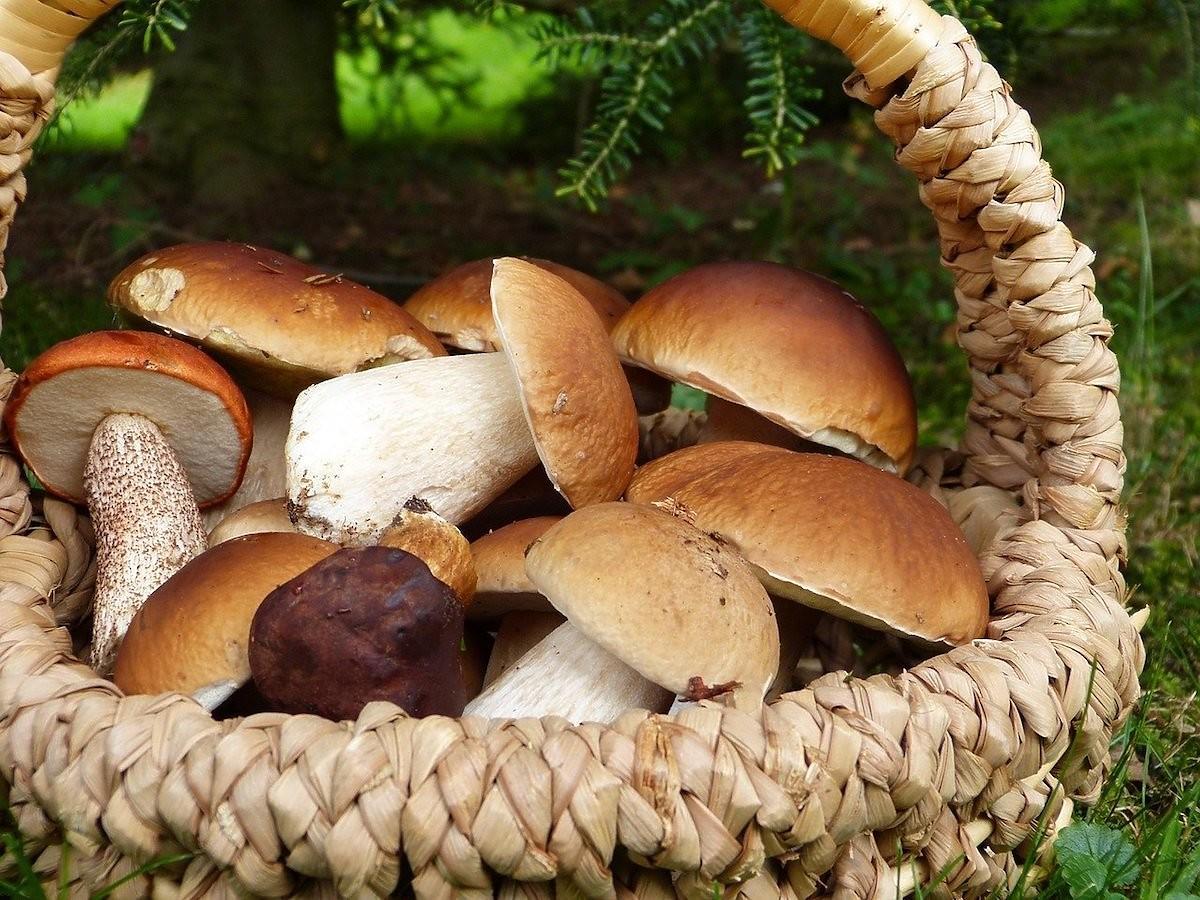 Dlaczego latem grzyby są takie robaczywe? Odpowiedź zna tylko geniusz