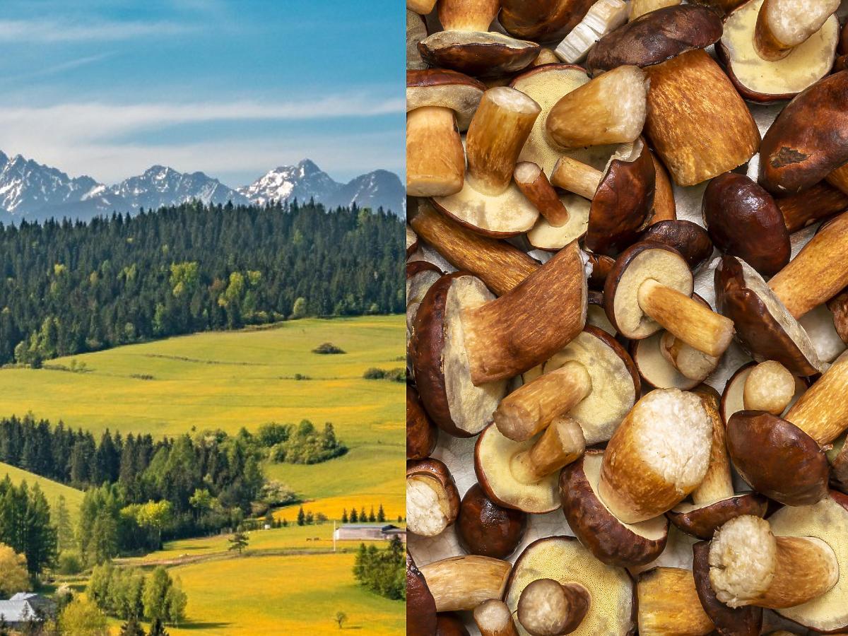 Dokąd na grzyby? Podajemy miejsca, sprawdzone w rożnych regionach Polski