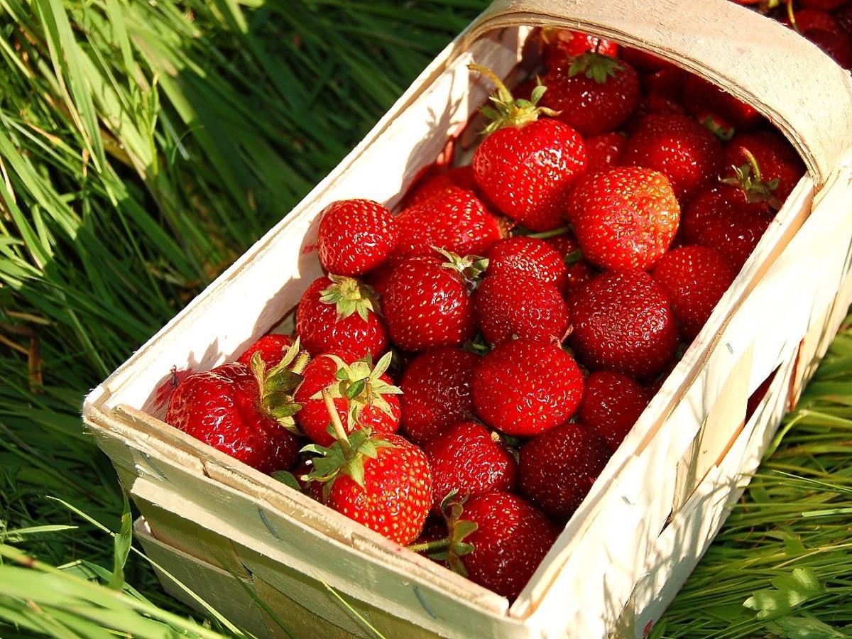 Ile kosztują pierwsze polskie truskawki? W tym roku tanio nie będzie