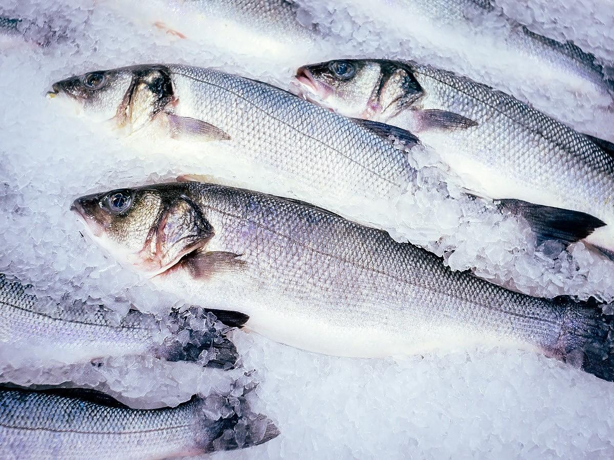 Jak przechowywać surowe ryby? 1 błąd i ryba zacznie się psuć