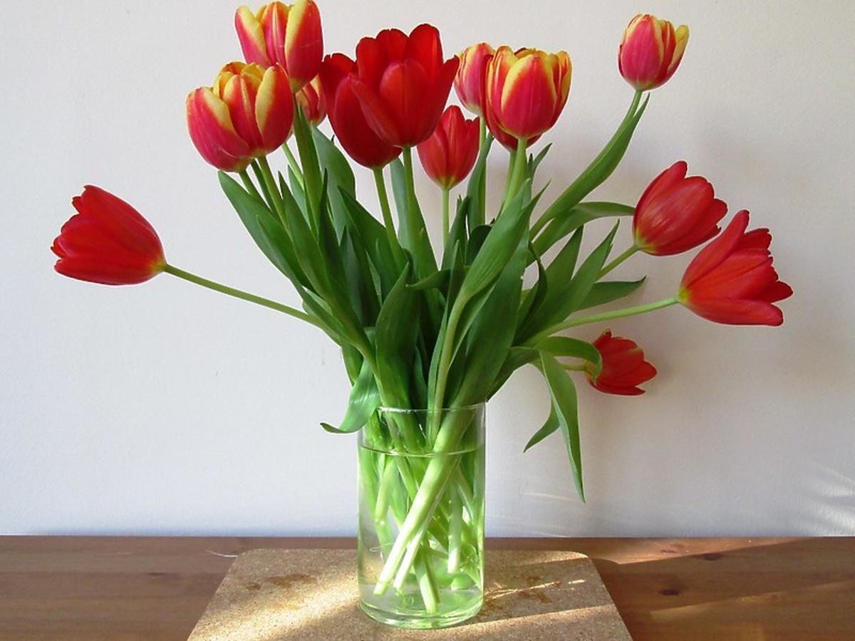 Jak przedłużyć świeżość tulipanów? Wsypcie trochę tego kuchennego produktu