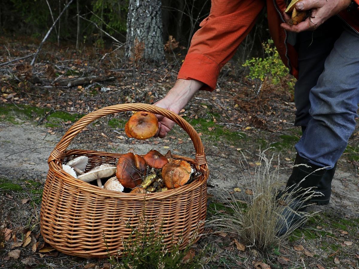 Jak wypatrzyć w lesie grzyba? Z tych sztuczek korzystają tylko doświadczeni grzybiarze