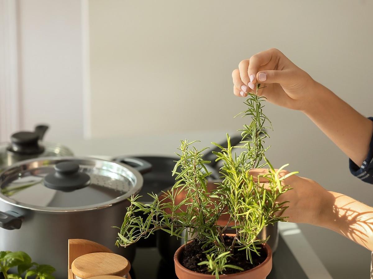 Jakie zioła dodawać do różnych potraw? Odpowiednio dobrane podkręcą smak jedzenia