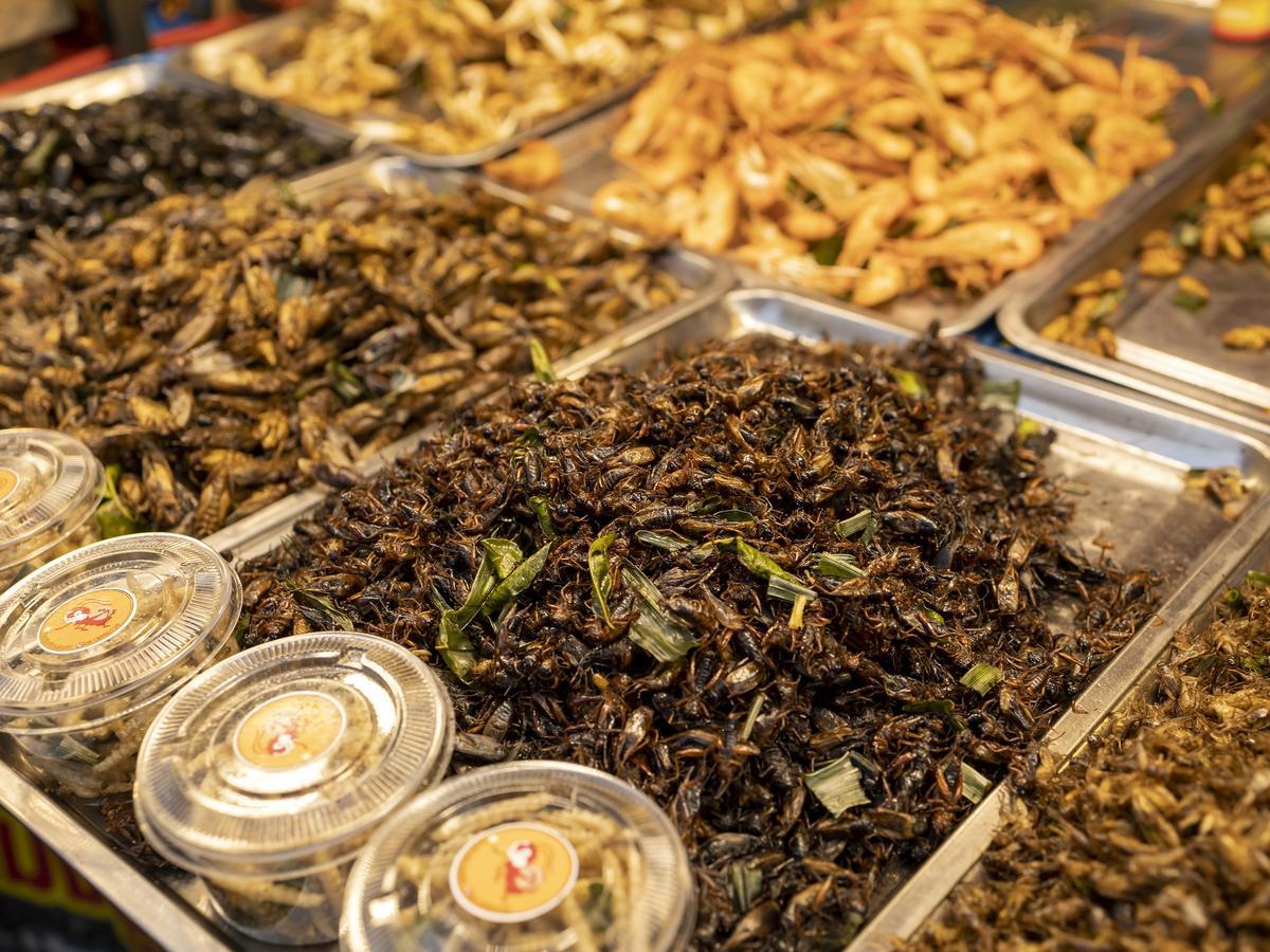 Jedzenie owadów wspomaga budowę mięśni! Szokujące badania naukowców