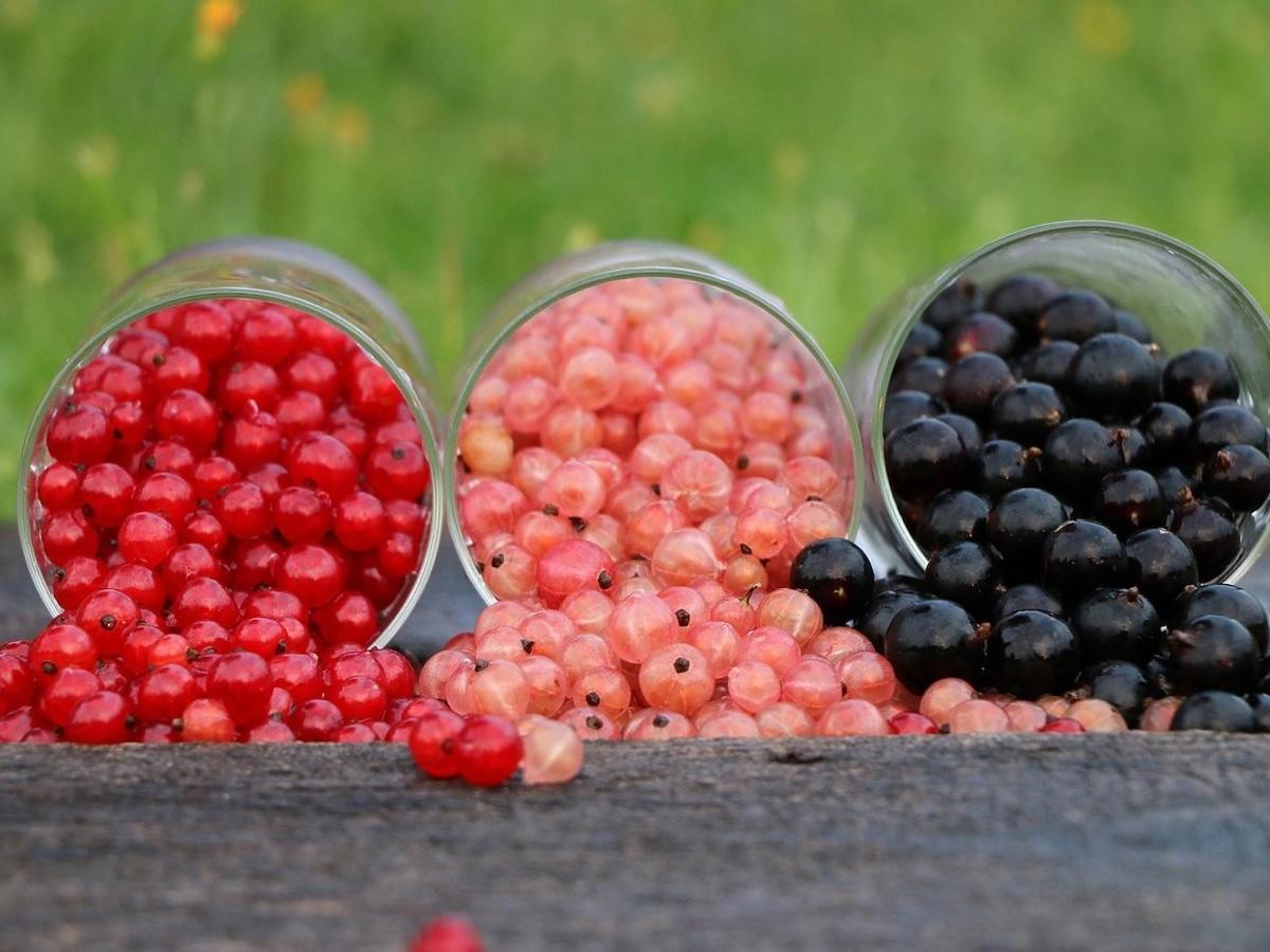 Jest zdrowsza niż wiśnie i czereśnie. Chroni przed miażdżycą, rakiem i chorobami serca