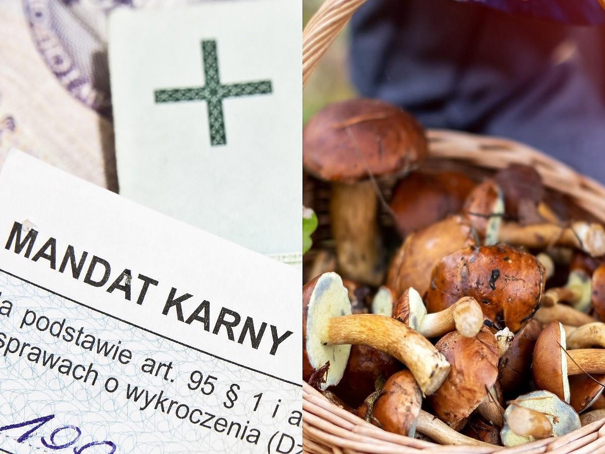 Mandat za zbieranie grzybów? Możecie zapłacić od 50-1000 zł. Sprawdzamy za co