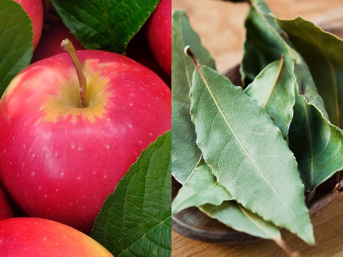 Napar z jabłek i liści laurowych to remedium na przeziębienia. Pomoże też przy migrenie