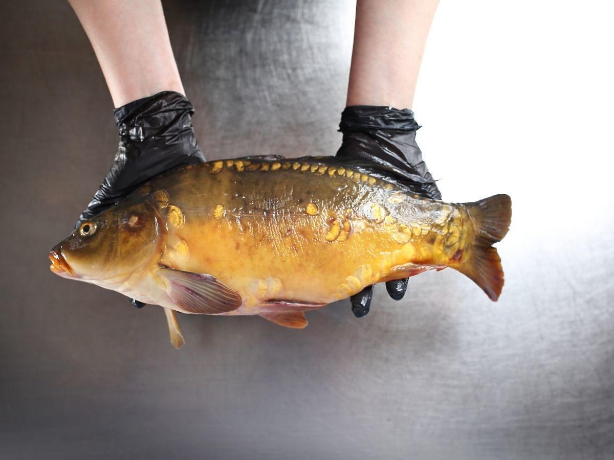 Nie kupicie już żywego karpia? Politycy pracują nad zakazem sprzedaży żywych ryb