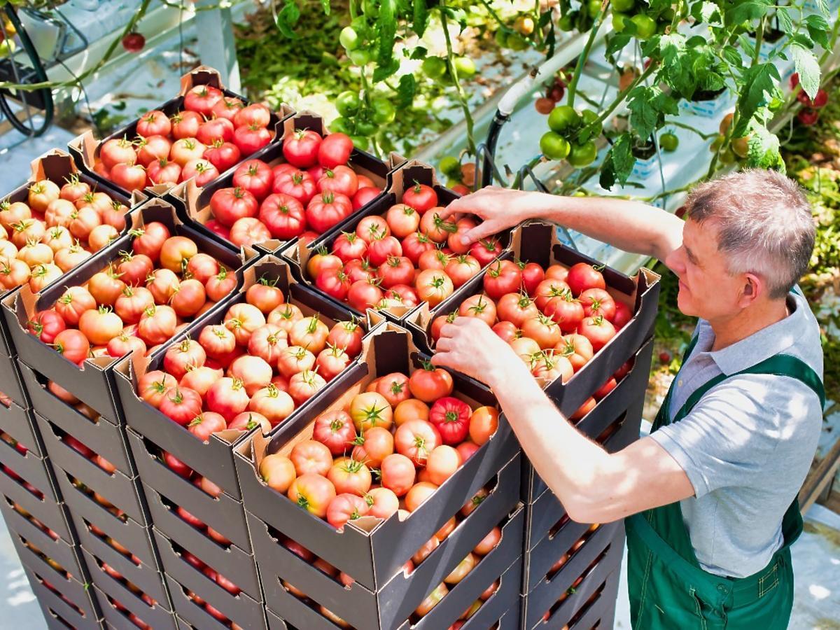 Owoce, warzywa, jajka - rolnicy sprzedają to na e-bazarku. Zamówilibyście jedzenie przez kuriera?