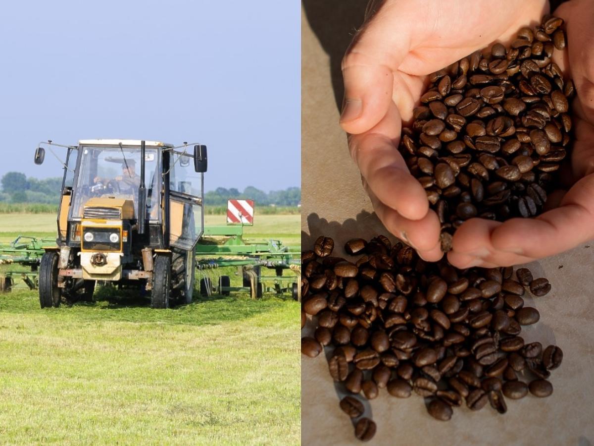 Polscy rolnicy zaczną uprawiać kawę?! Kawowy przedsiębiorca zaskakuje swoją śmiałą wizją