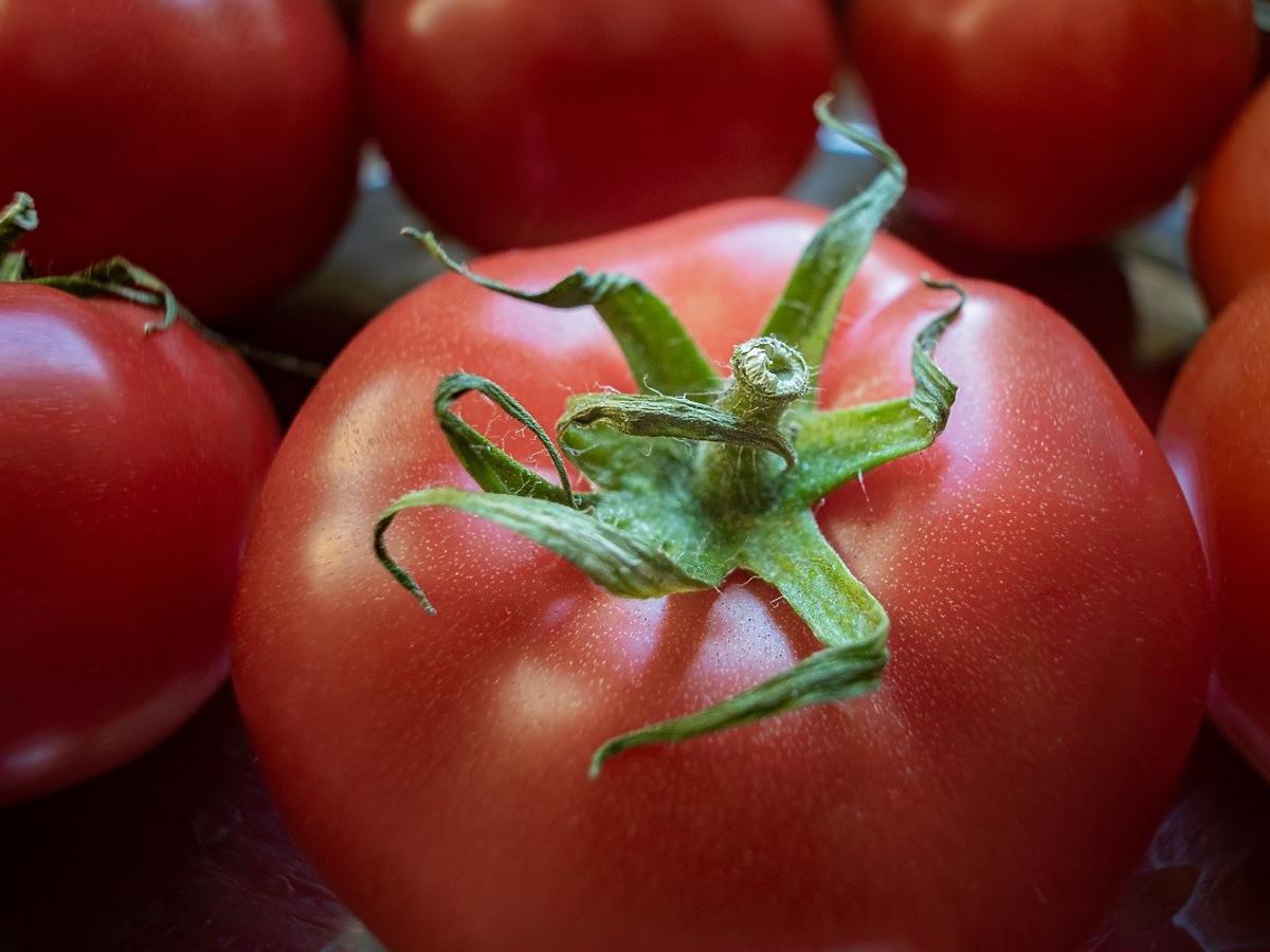 Przechowujecie tak pomidory? Nic dziwnego, że szybko się psują