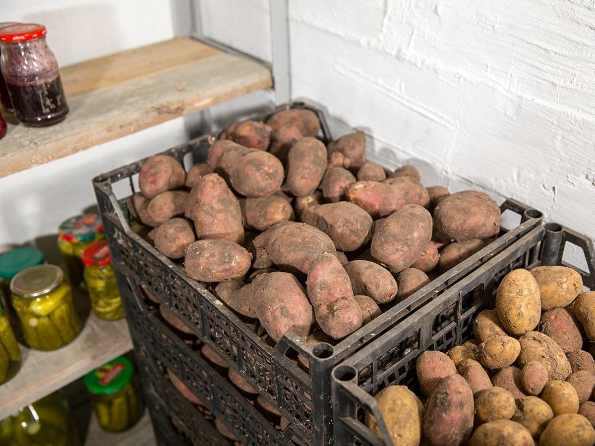 przemarzniete ziemniaki