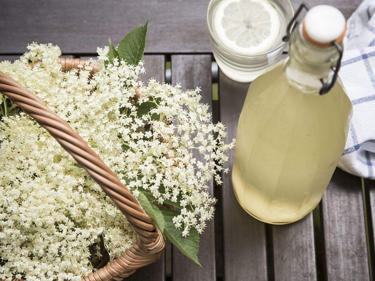 Przepis na syrop z kwiatów czarnego bzu. Chroni przed przeziębieniem i grypą