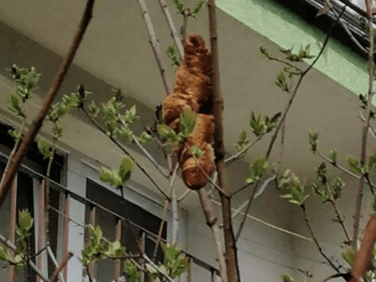Przerażona kobieta wezwała pomoc do groźnego zwierzęcia za oknem. Okazało się, że to… rogalik