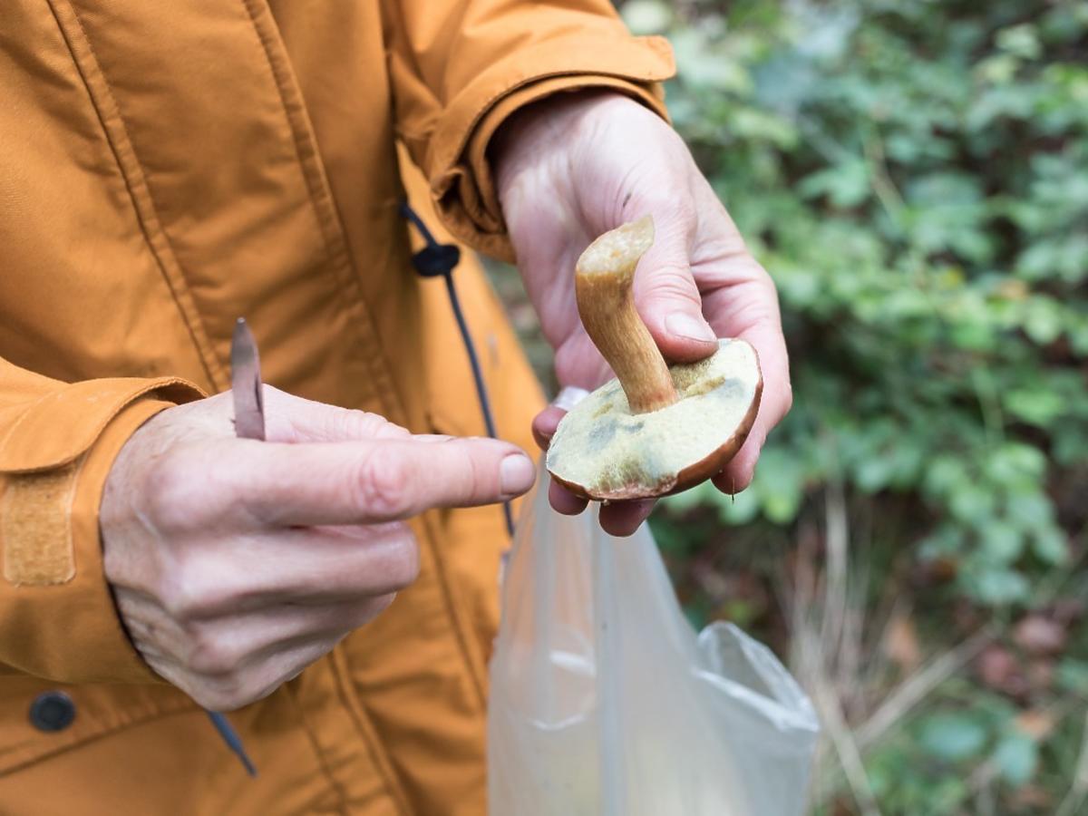 Robicie tak z grzybami? Przez ten fatalny błąd nawet jadalne grzyby mogą stać się trujące