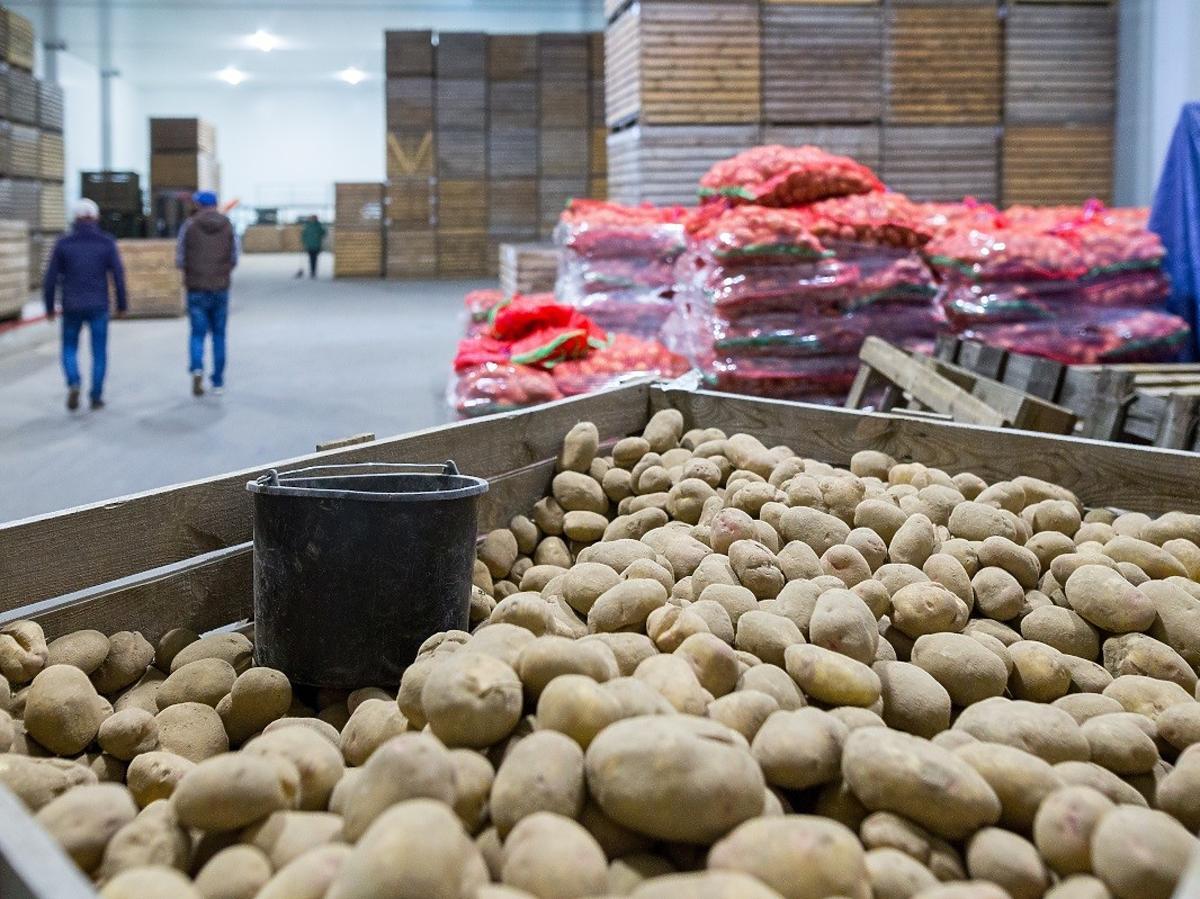 Rolnik przywiózł 10 ton ziemniaków i chciał je rozdać za darmo, ale nikt nie chciał ich wziąć. Dlaczego?
