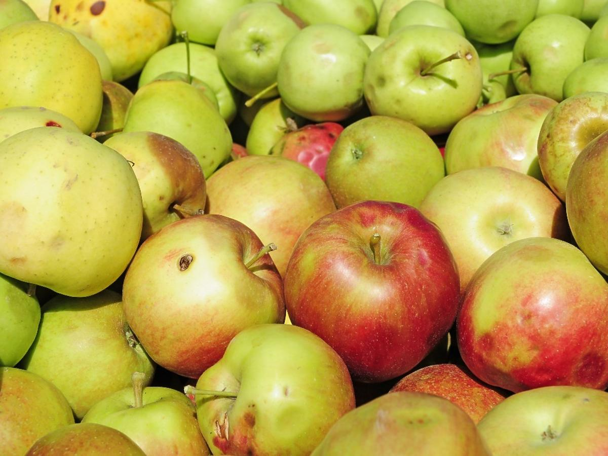 """Sadownicy chcą sprzedawać """"jabłka po gradzie"""". Kupilibyście nieidealne owoce?"""