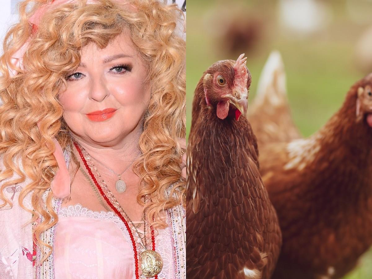 """Skandal w """"Kuchennych rewolucjach"""". Magda Gessler znalazła w kuchni żywe kury"""