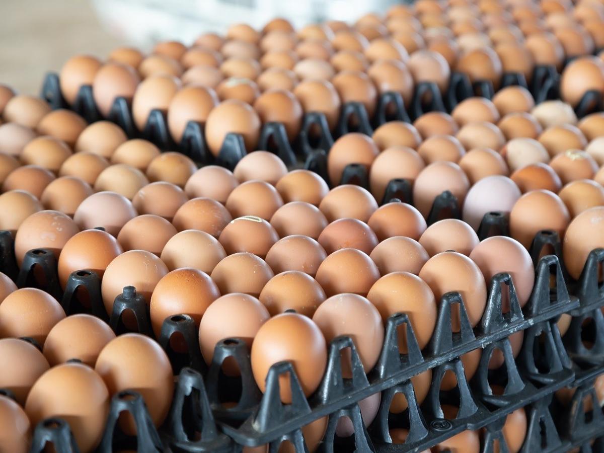 Trwa kryzys w branży drobiarskiej. Czy ceny jajek też wzrosną?