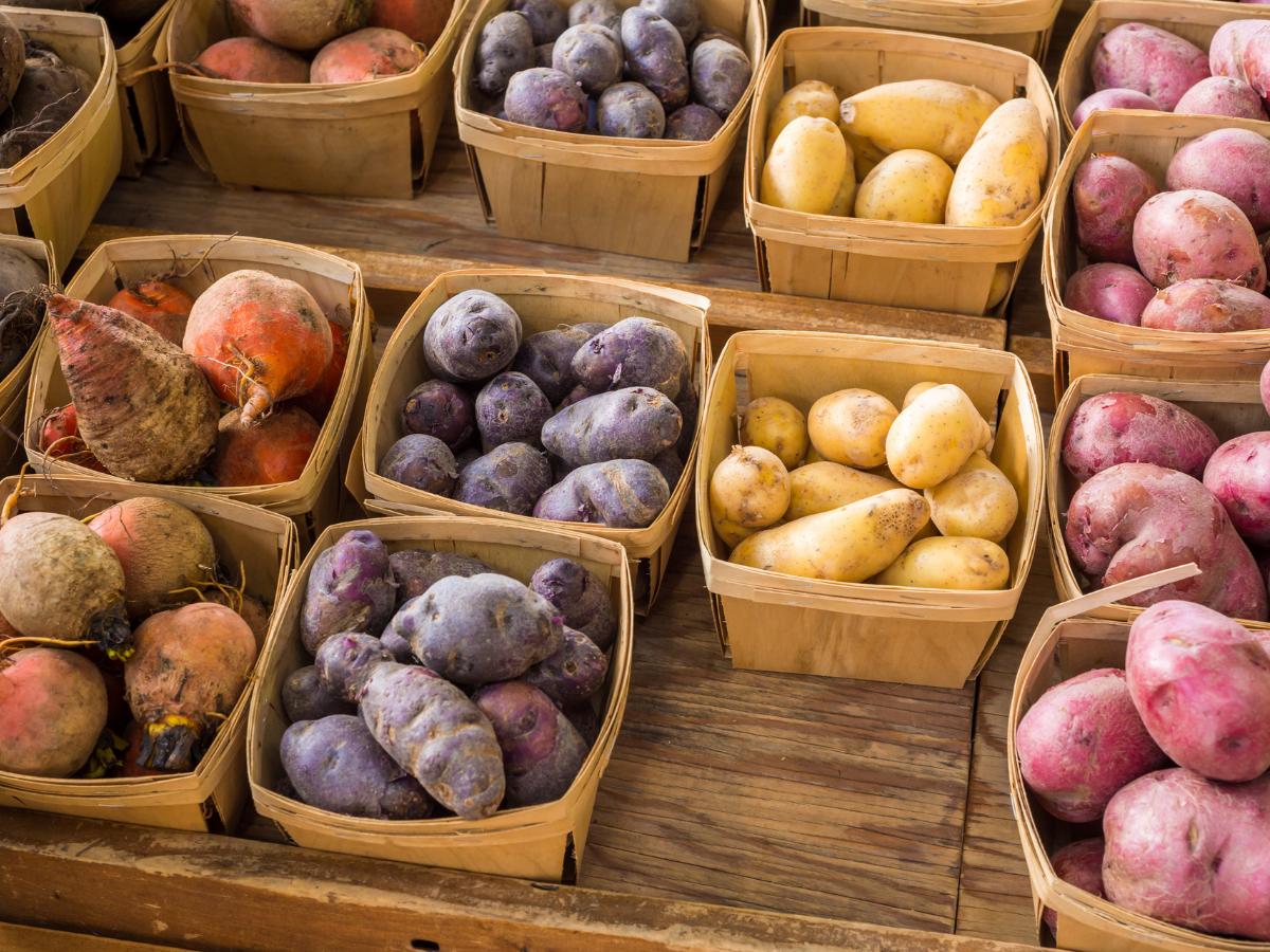 typy ziemniaków rozpoznawanie