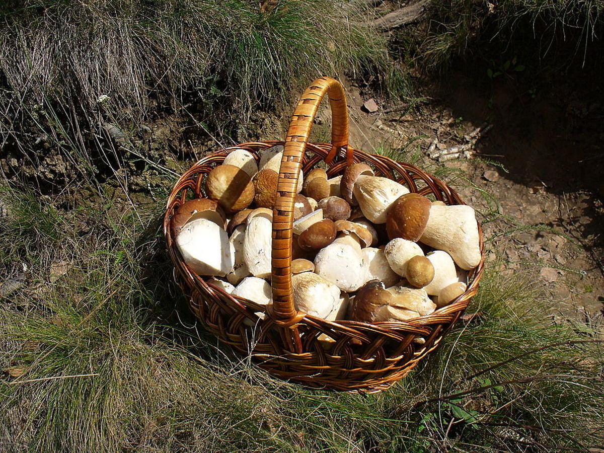 Wybieracie się na grzyby? Sprawdźcie, gdzie w obrodziło i w którym miejscu jest ich prawdziwy wysyp