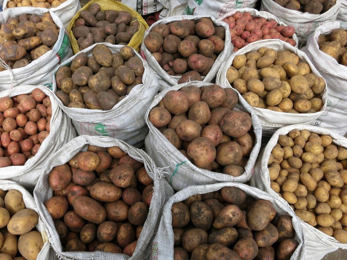 Ziemniaki A, B czy C: które nadają się na frytki, a które na kopytka i placki ziemniaczane?