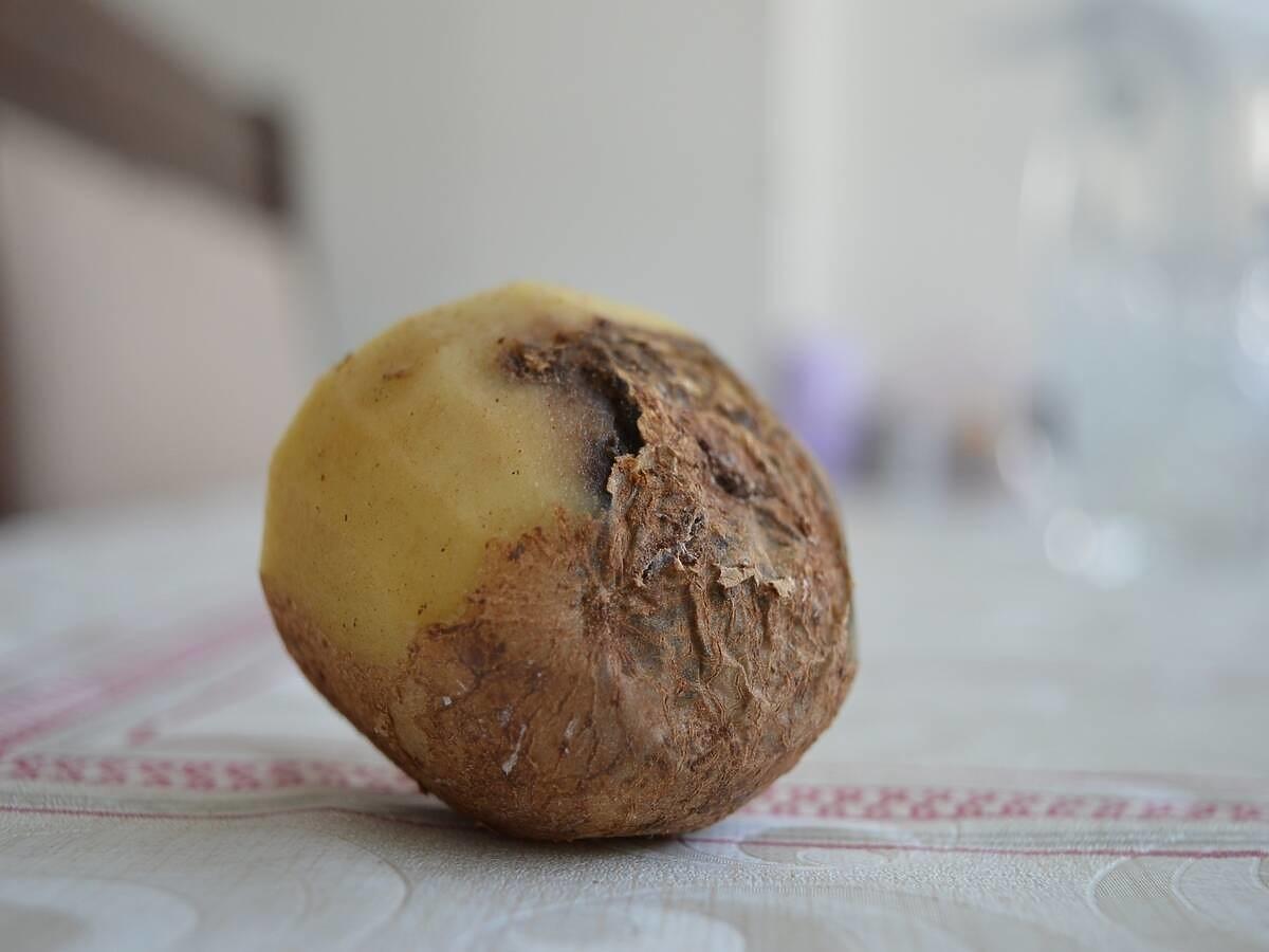 """Znany supermarket sprzedaje najgorszej jakości ziemniaki. """"Normalnie są przeznaczone dla świń i krów"""""""